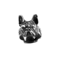 French bulldog big